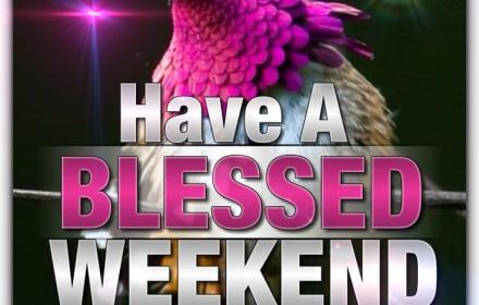 BIRD HAPPY WEEKEND