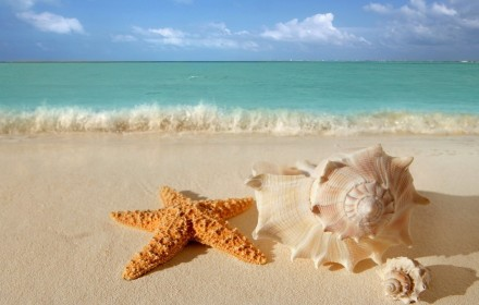 6-starfish-seashells-beach-sand-wallpaper