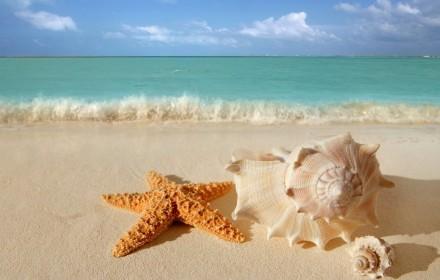 6-starfish-seashells-beach-sand-wallpaper