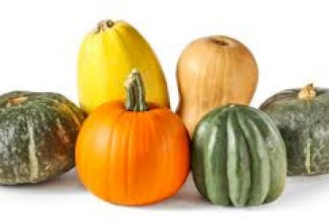 What did the word Squash come from?