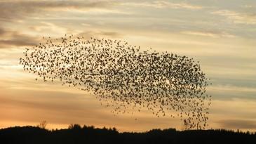 A beautiful bird symphony!